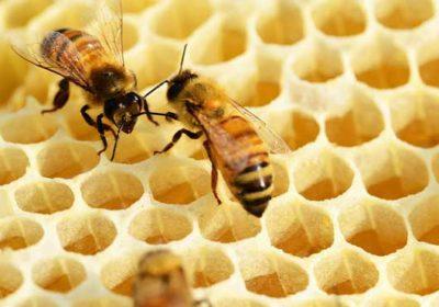 Sajam pčelarstva
